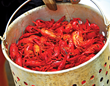 The 31st Annual Pensacola Crawfish Festival will feature more than 16,000 pounds of boiled mudbugs in May.