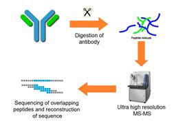 De Novo Antibody sequencing workflow