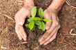 Rockler Helps Plant 10,000 Trees for Earth Day - Partnership with...