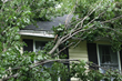 3 Ways to Protect Trees from Storm Damage Released in New Article by Precision Tree Services