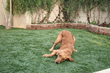 ProGreen Synthetic Grass is the Official Turf Provider at the Dallas...