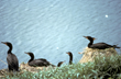 Actions Aimed to Stop Over 10,000 Wild Water Birds Set for Slaughter...