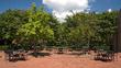 Hyatt Fairfax Gears Up for Spring Fun