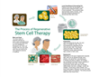 The Process of Regenerative Stem Cell Therapy