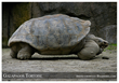 The Gallapagos Tortoise - an Endangered Species - photo by Endangered Species Journalist Craig Kasnoff