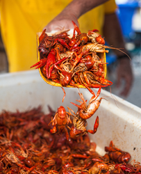 A photo of crawfish