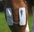 Microlief Equine Microcurrent Therapy
