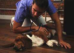 InstaVet brings world-class veterinary care to New Yorkers' doorsteps