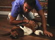 InstaVet Launches On-Demand Veterinary Care Services in NYC