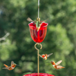 Droll Yankees' New Ant Moat is the Essential Nectar Bird Feeder...