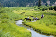 Horseback Riding at Snake River Sporting Club