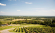 Virginia Wines | Go Blue Ridge Travel