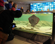 Toledo Transformation! The Improved Toledo Zoo Aquarium Has Opened with A Collection of New Exhibits and 25,000 pounds of R-Cast® Acrylic by Reynolds Polymer Technology