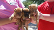 Puppies Rescued from Suspicious House Fire in Miami Dade Find Hope for...