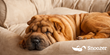 Snoozer Pet Products & The Whitaker Group