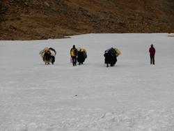 Tibet trekking 2015-2016