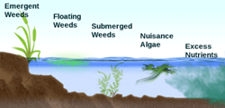 Weed Type Diagram