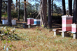 Clemson University Taps Kelly Registration Systems to Prevent Honey Bees from Accidental Pesticide Exposure