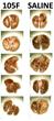 Novel Immunomodulatory Treatment Induces Apoptosis in Melanoma