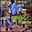 Coral Tree Gardening