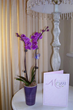 Costa Farms Share Tips for Growing Orchids for Mother's Day