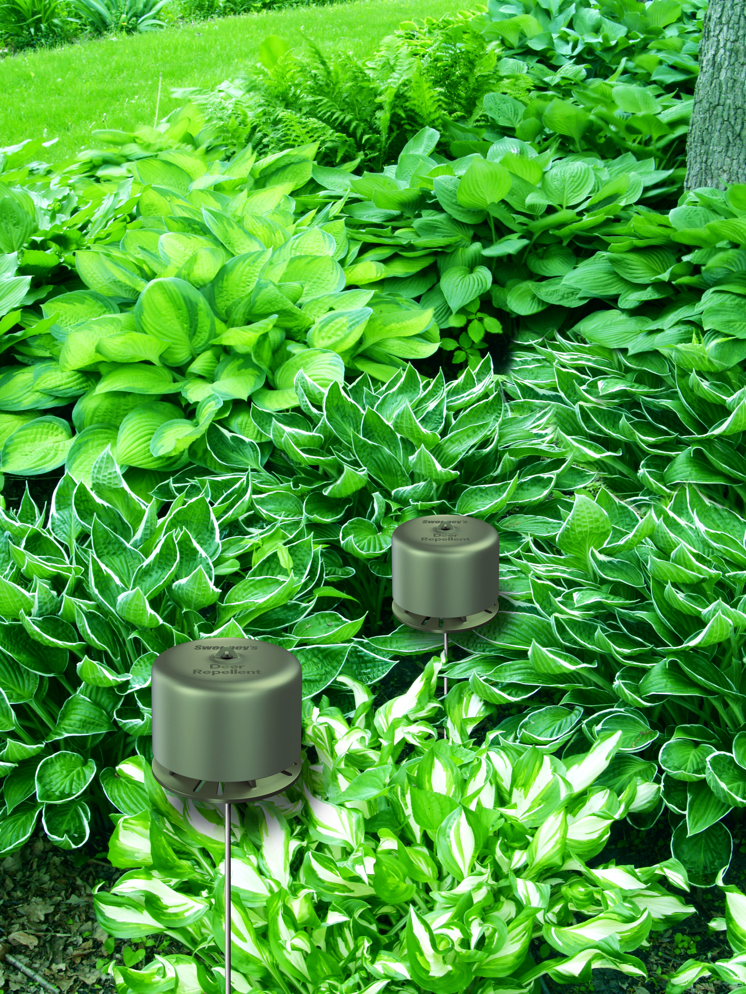 Perfect Repellent For GardensProtect Vegetable Gardens And Other Edible  Crops From Deer Without The Repellents Coming Into Contact With The Leaves  Or Fruit.