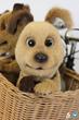 Mascot Puppy