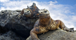 Goway Offers Airfares Under $200 to Those Booking a Galapagos Tour