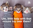 Best Friends Animal Society's Lighthearted Awareness Campaign Highlights Serious Needs of Kittens and Animal Shelters
