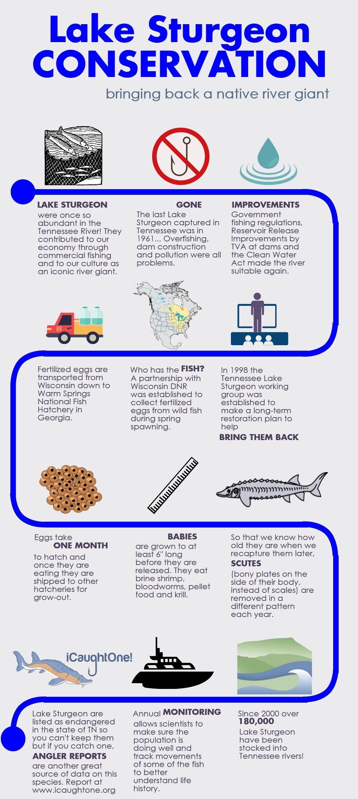 Freshwater fish of georgia - Lake Sturgeon Conservation Infographic By Kathlina Alford Tnaci Reintroduction Biologist Lake Sturgeon Conservation Infographic By Kathlina Alford
