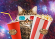 World's First Cat Cinema is showing Sci-fi, Horror Classics
