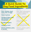 New Research Shows 70% Of Dog Owners Unaware Of Potentially Harmful...