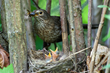 Birdsong apps are harmful to birds, but new Chirpomatic app has a...