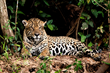 Pantanal Wildlife Photography Tour Announced by Ciclismo Classico