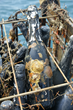 This Sparkling Wine is Sea-Aged in the Sea-Cellars at the Bottom of...
