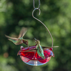 Droll Yankees Ruby Sipper Hanging Hummingbird Feeder