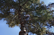 5 Traits to Expect In Tree Removal Services Listed in New Article by Precision Tree Services