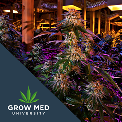 Grow Med University - Start building your grow room now.