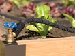 Conserve Time and Water While Growing Beautiful and Productive Vegetable, Ornamental and Container Gardens This Season