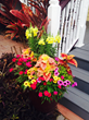 Coleus, zinnias, snapdragons in container garden pot in St. Augustine, Florida, FL