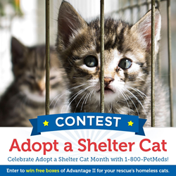 1-800-PetMeds Adopt a Shelter Cat