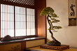 A Japanese White Pine Bonsai in a traditional Tokonoma display.