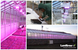 LumiGrow Lights Important to Pittsburgh Job Corps Center's Quest for Self-Sustainability