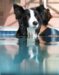 Pet Paradise Resort Acquires New Location in New Mexico
