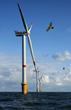 Wind Turbines: Bad News for Birds