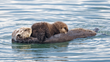 Monterey Bay Sea Otter Mother and Pup near Moss Landing