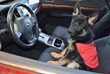 "Suburban Subaru ""Shared the Love"" with Fidelco Guide Dog Foundation"