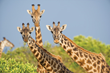 Grand Hyatt Denver Launches Summer with a Zoo Safari Package