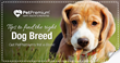 PetPremium Publishes e-Book for Future Dog Owners
