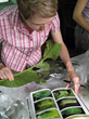 One teacher fellow studies how climate change is disrupting foodweb relationships in Costa Rica. Credit: Vanessa Bliss